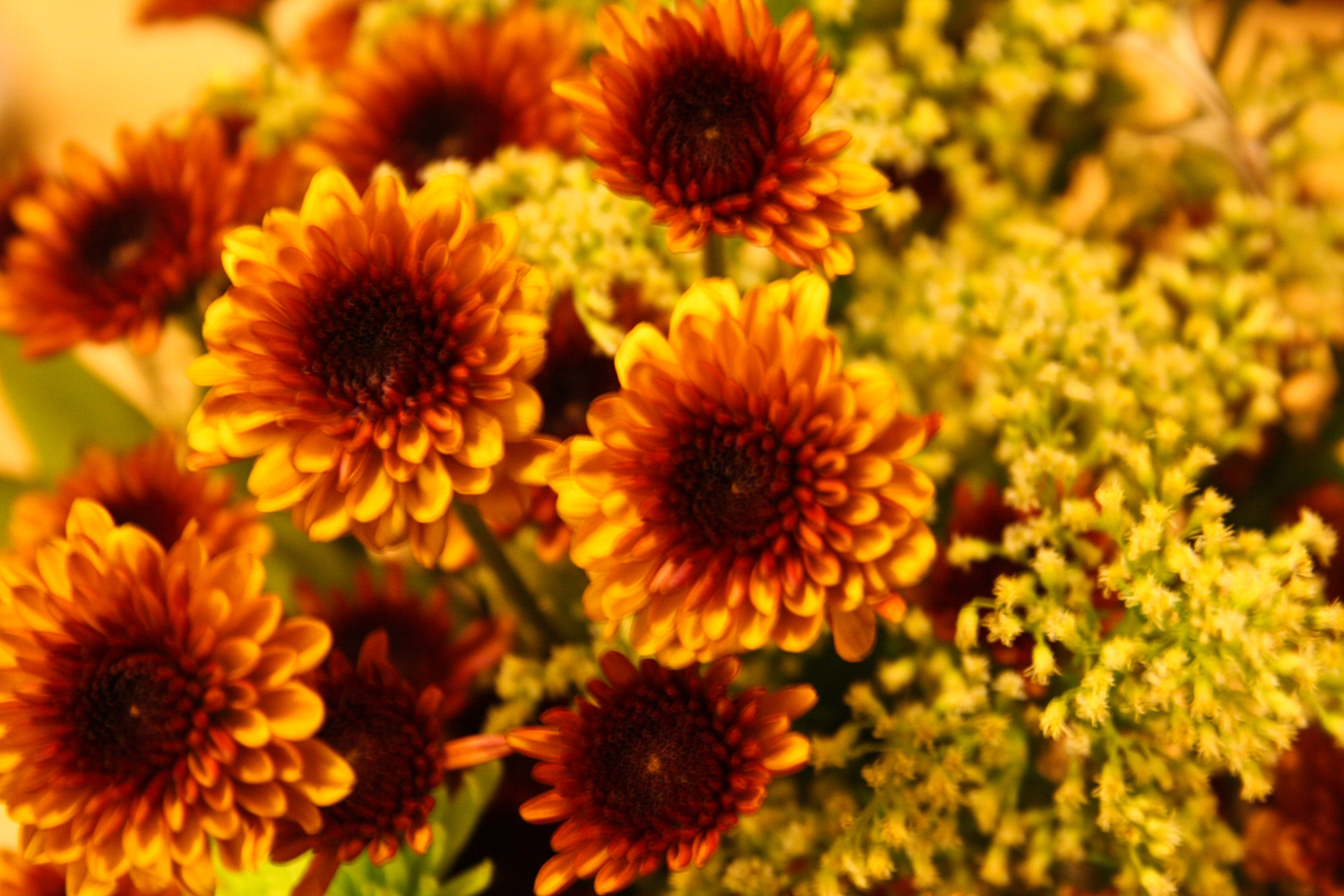 Mum s the word theeverydaykitchen for Flowers that are in season